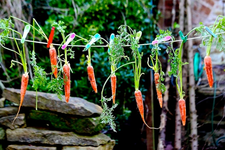 Carrots on a line by Jasper Cannis, aged 10.